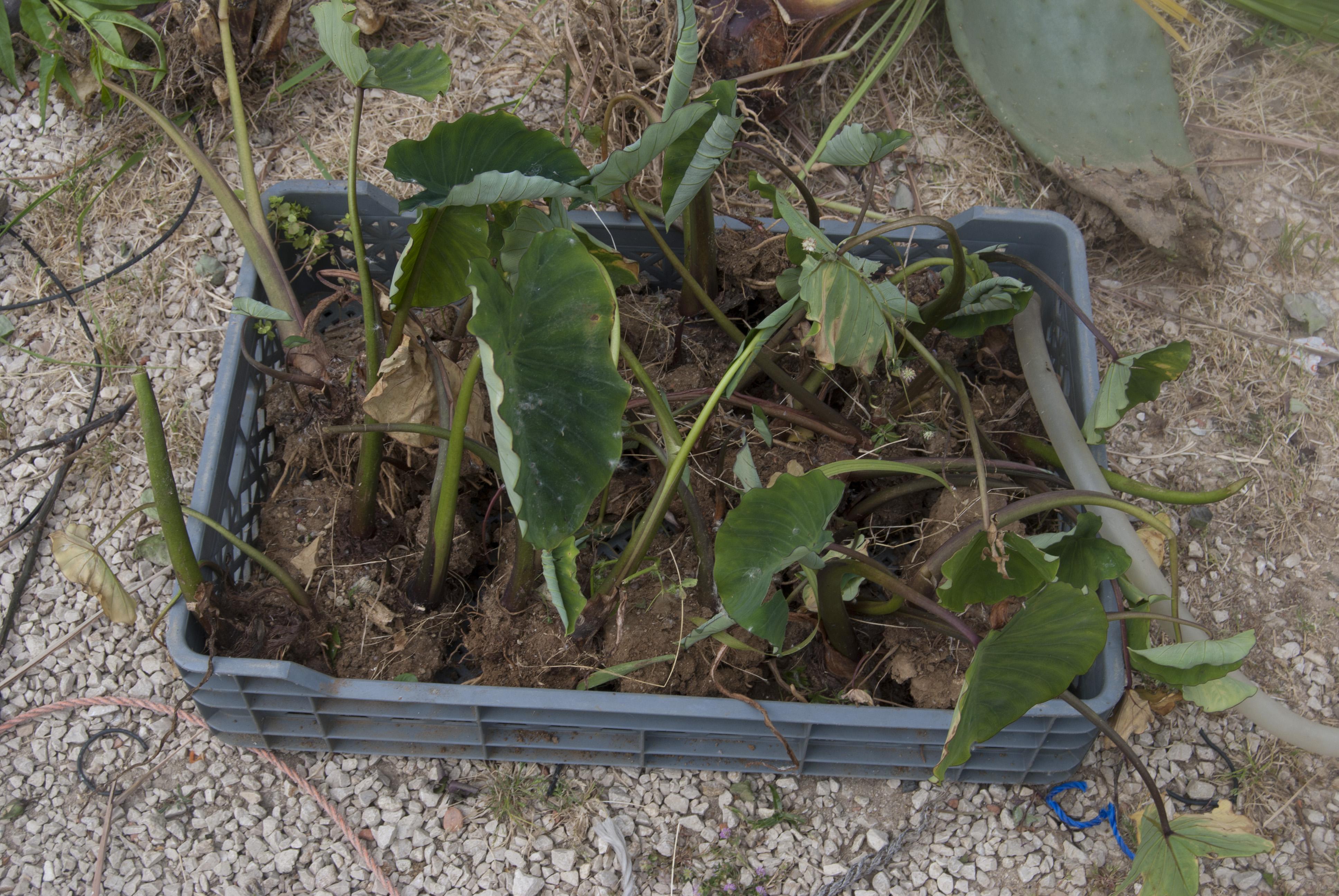 Plants collected in Quinta da Vitória. 2012-13 © Sofia Borges