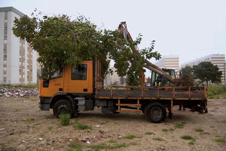 Transplant of trees in Quinta da Vitória. 2013 © Sofia Borges